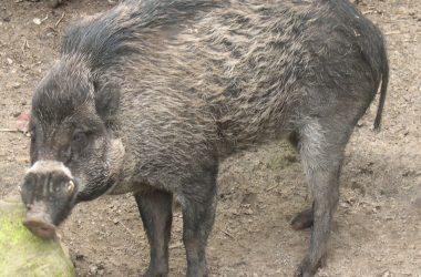 Piggybiz.info